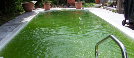 How to turn your Pool green fast